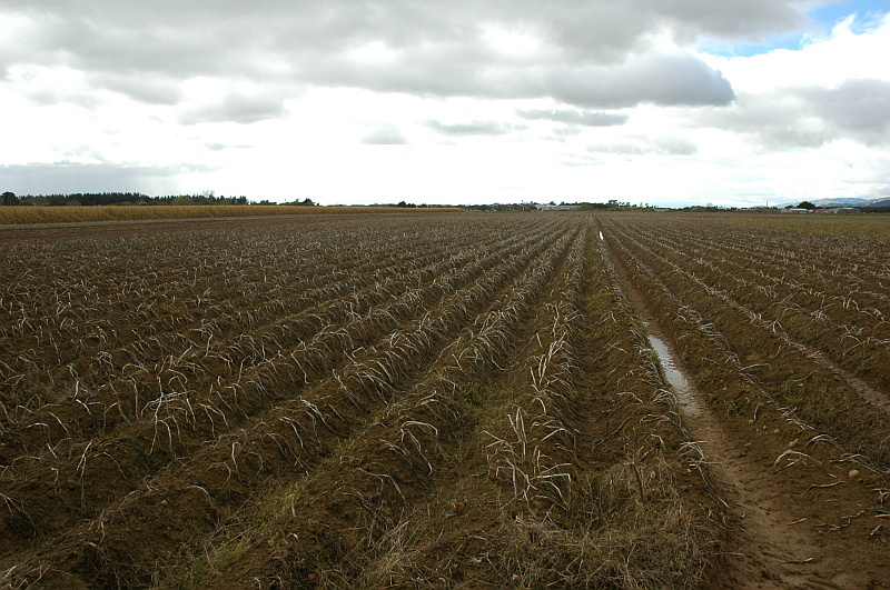 Investigating variability in potato crops landwise for 90 soil compaction