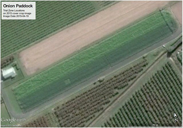 MicroFarm Onion Beds with Winter Cover Crops (as shown on Google Earth image 19 April 2015)